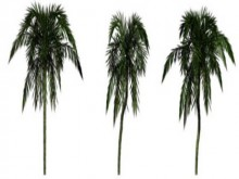 Palms Model preview