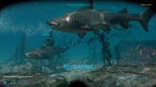 For sale: Shark Attack 2 Deathmatch (2015)
